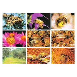 series-of-9-beekeeping-photos-of-21x30cm