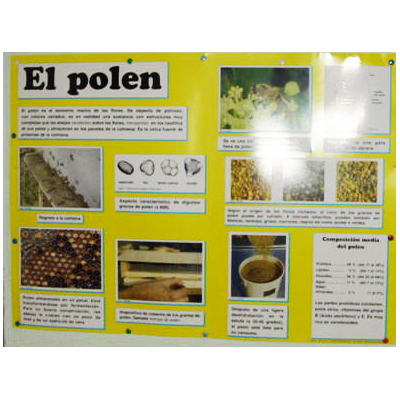 educational-mural-on-pollen-68-x-49cm