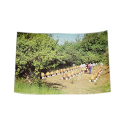 45-x-30cm-poster-of-an-old-apiary