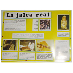 educational-mural-about-royal-jelly-68-x-49cm