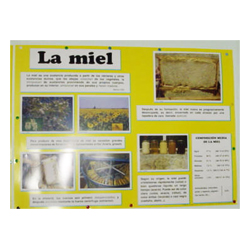 educational-mural-about-honey-68-x-49cm