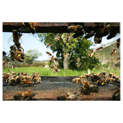 70x100cm-bee-poster-flight-of-bees