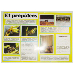 educational-mural-on-propolis-68-x-49cm