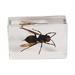 Bloco ilustrativo vespa asiática.
