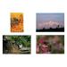 Serie di 4 poster di api di 70x49 cm.