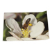 45 x 30cm poster bee perched on apple blossom.