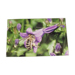 45 x 30cm poster of bee collecting flower.